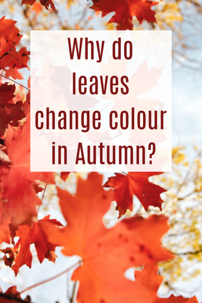 Why do leaves change colour in autumn. Autumn science for kids #scienceforkids #sciencequestions