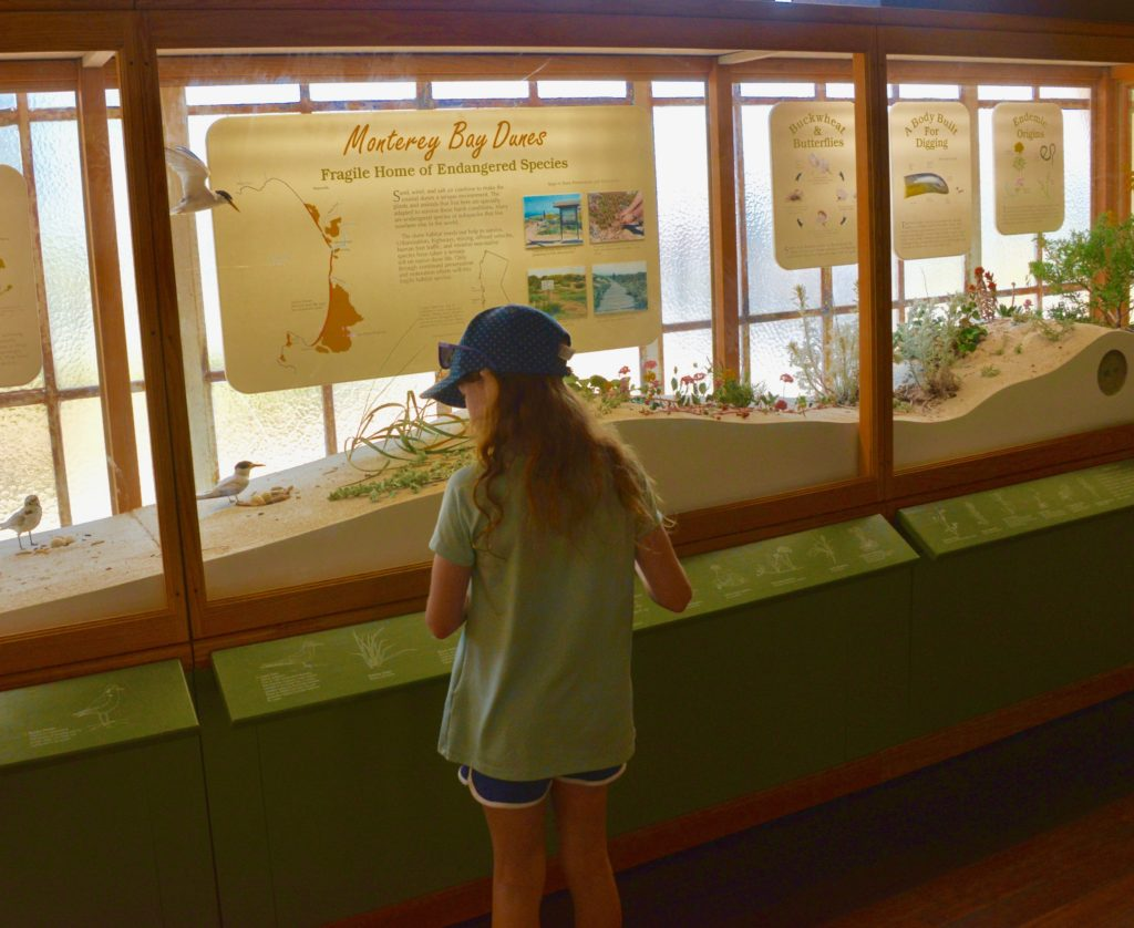 Exhiibit at Pacific Grove Natural History Museum