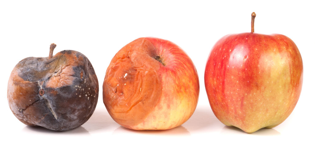 image of rotting apples
