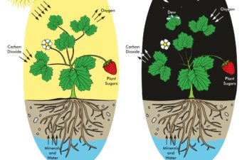 Photosynthesis and respiration comparison