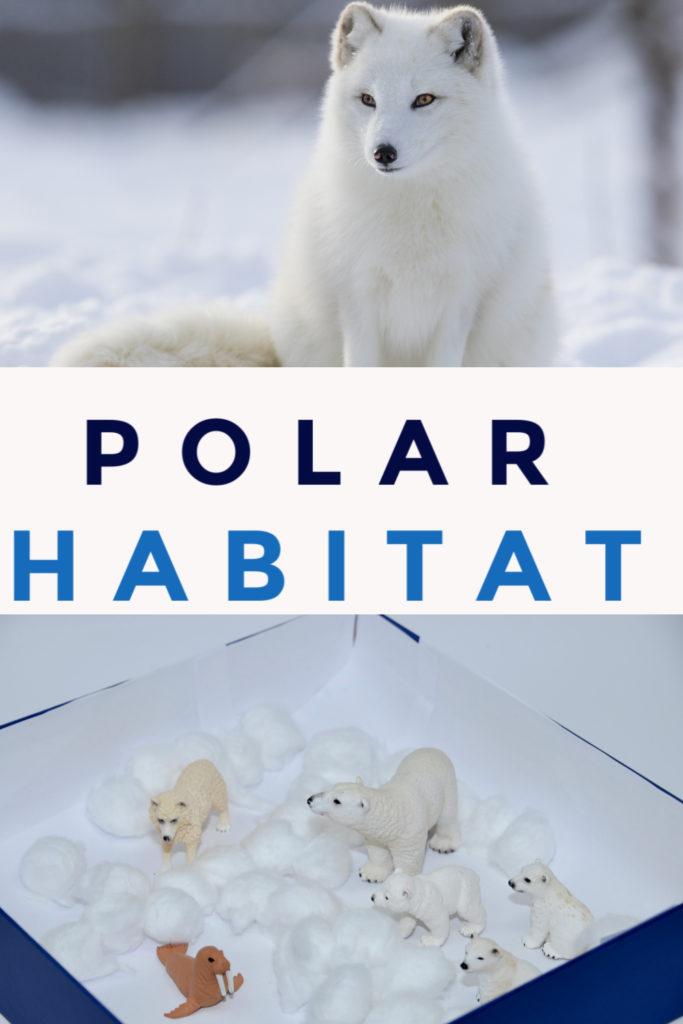 Polar habitat  model made in a shoebox #Habitatsforkids #scienceforkids #PolarHabitat