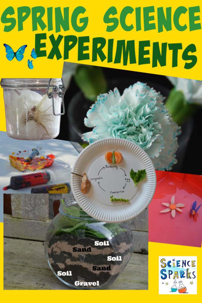 Spring Science Experiments for kids - make an edible butterfly life cycle, a wormery, model flowers a bean in a jar and more spring themed science