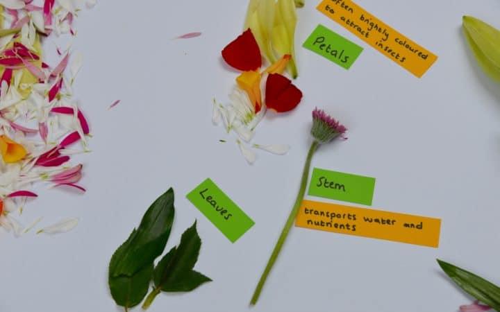 labelled flower diagram