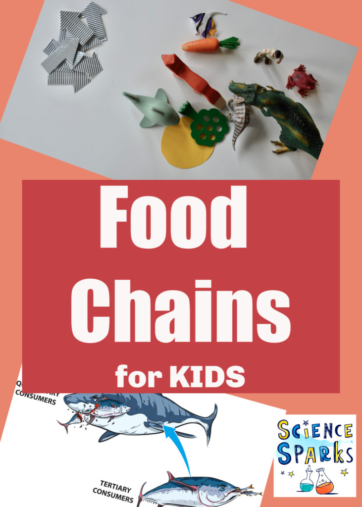 Food Chains for Kids - fun food chain activities for kids #FoodChains #ScienceforKids