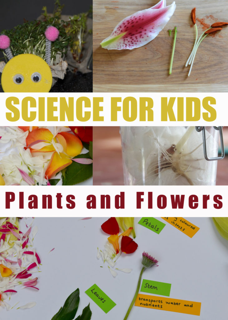 Plants and flower investigations for Key Stage 1 Science for Kids