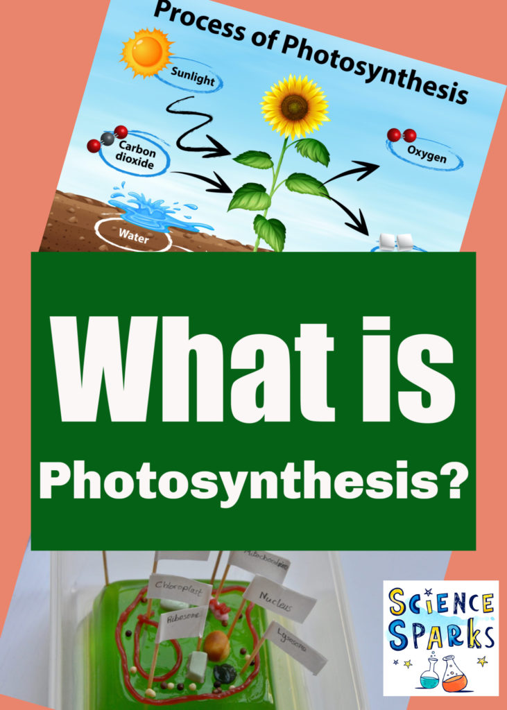 What is photosynthesis? Fun plant science experiments for kids  #plantscienceforkids