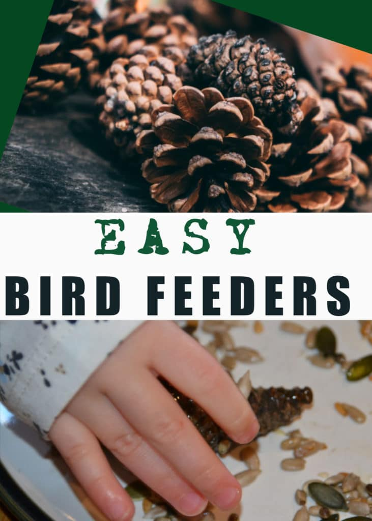 Easy bird feeders for kids to make using  pinecones, lard and seeds #birdfeeders #scienceforkids #outdoorscience