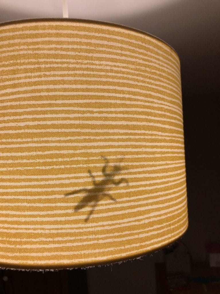 Spider in a lampshade - fun prank for kids