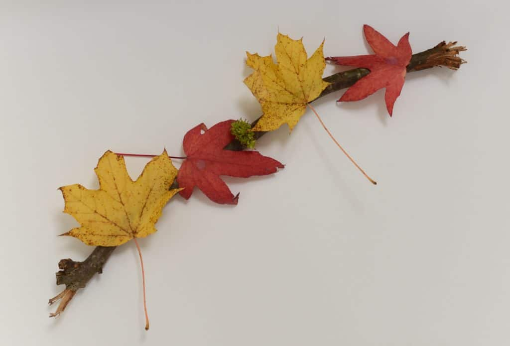 colourful leaves attached to a stick as part of a fun autumn treasure hunt activity.