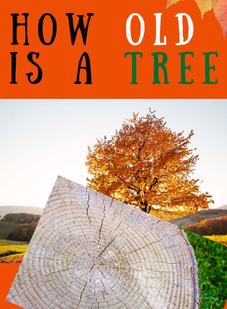 Find out how old a tree is with these three methods of finding out. #treescience #howoldisatree