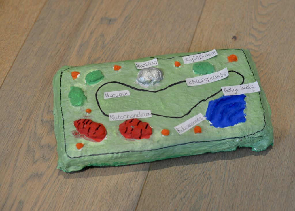 plant cell model made from modroc and painted to show the organelles.
