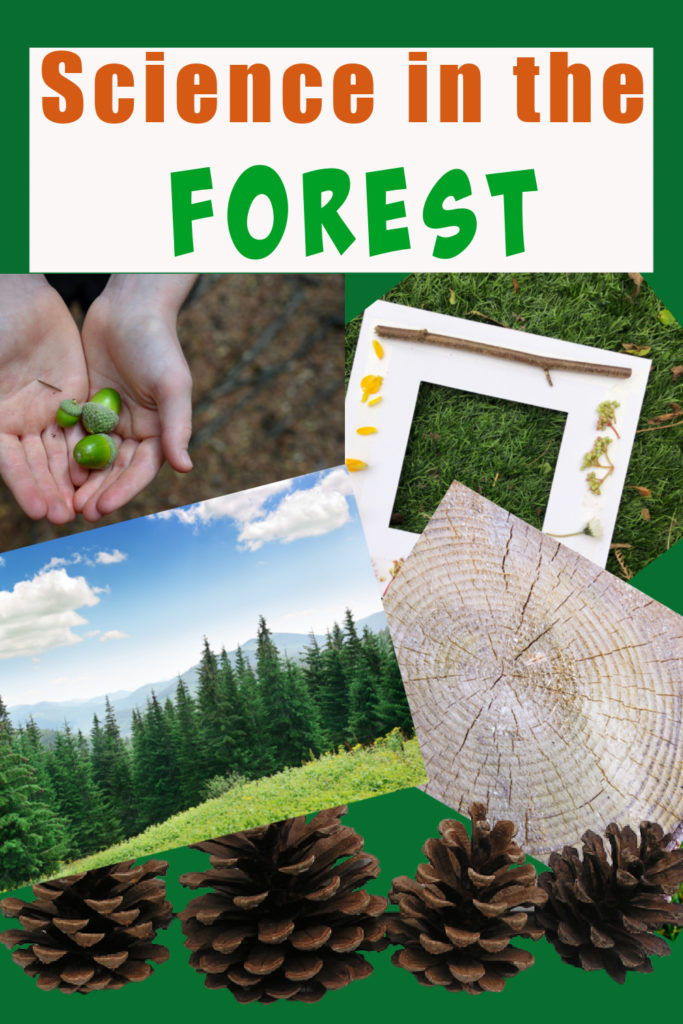 Collection of science ideas for fun in the forest. Woodland science ideas for kids #scienceforkids #funscience #forestscience #outdoorscience #forestschool