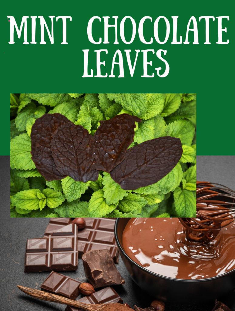 Mint Chocolate Leaves - learn about changes of state with this fun kitchen science activity