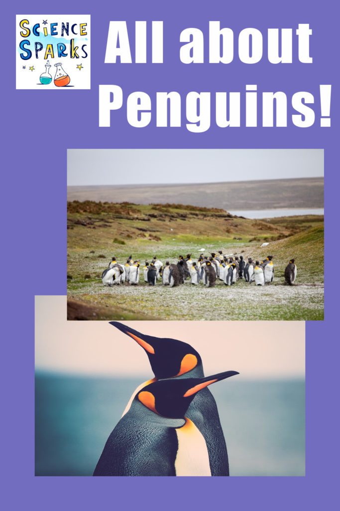 Fun facts and activities about Penguins!! #Penguins #Penguincrafts #Penguinideas #Penguinfacts #Penguinscience