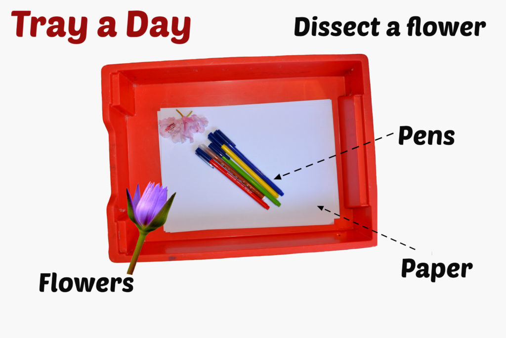 Dissect a flower