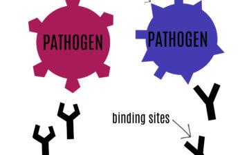 Antigen and antbody