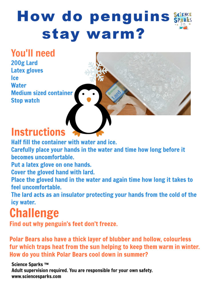 instructions for an experiment to discover how penguins stay warm in winter