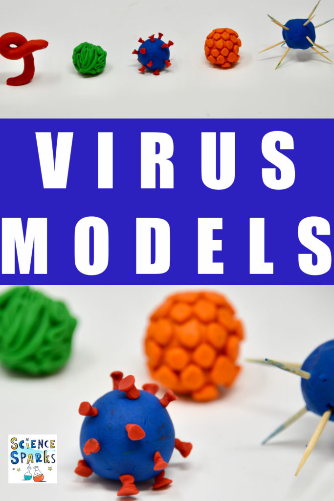 Learn about the structure of viruses by making play dough or plasticine virus models. #virology #virusesforkids #viruses #biologyforkids