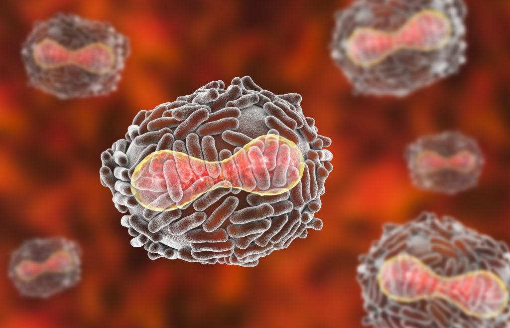 3D model of the variola virus - smallpox