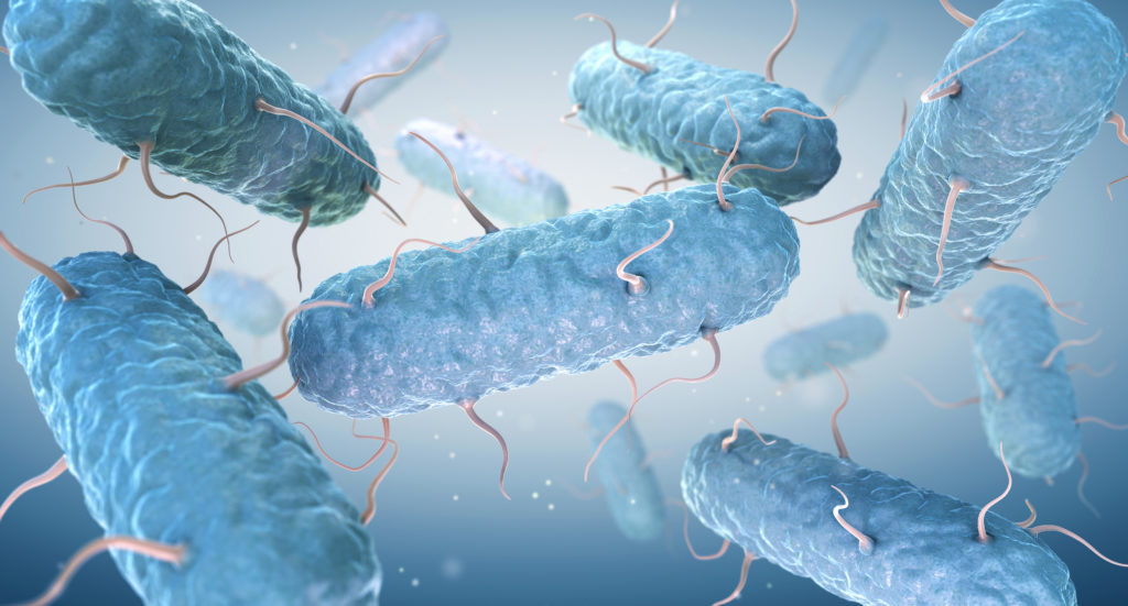 Bacteria image