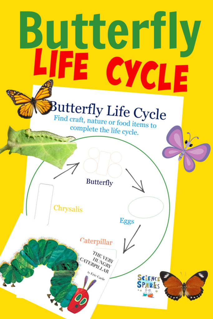 Very hungry caterpillar life cycle activity