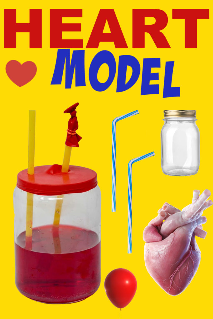 model of one chamber of the heart using a jar, balloon, straws and water.