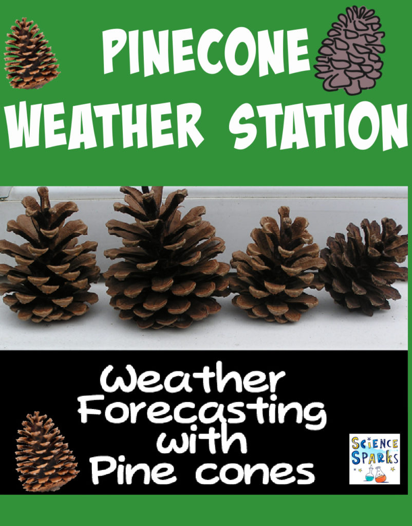Image of pinecones being used as a pinecone weather station
