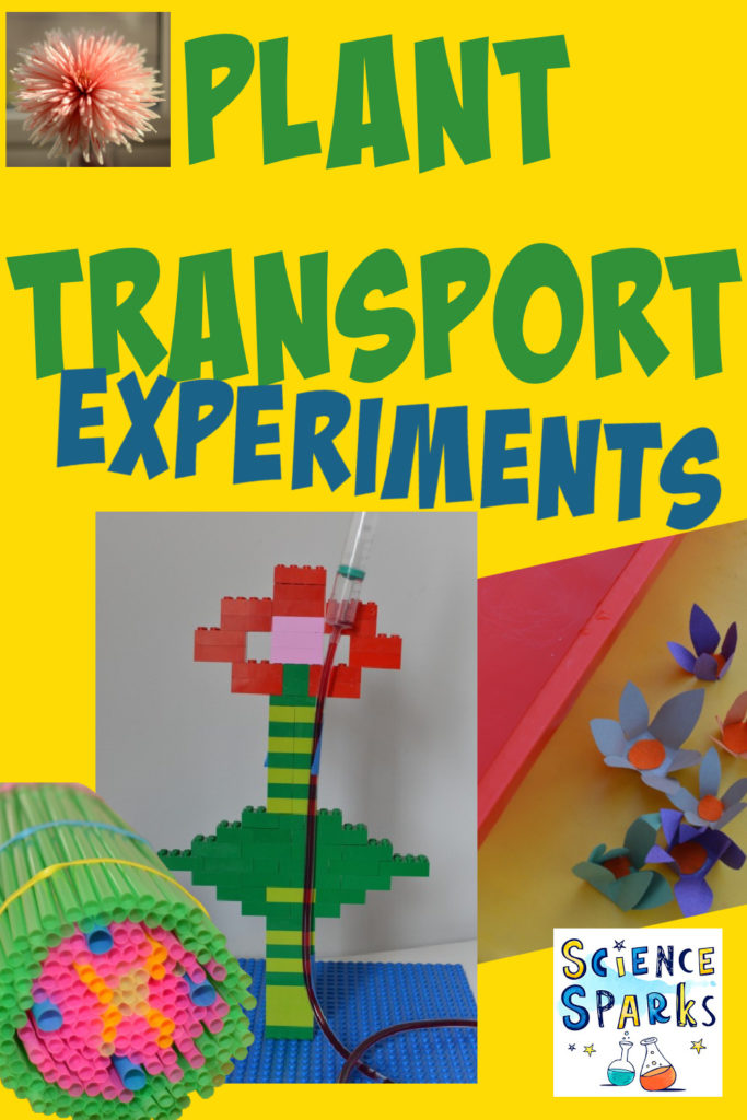 Collage of different plant science experiments for kids. Includes a straw stem model, a flower transpiration model and magic blooming flowers