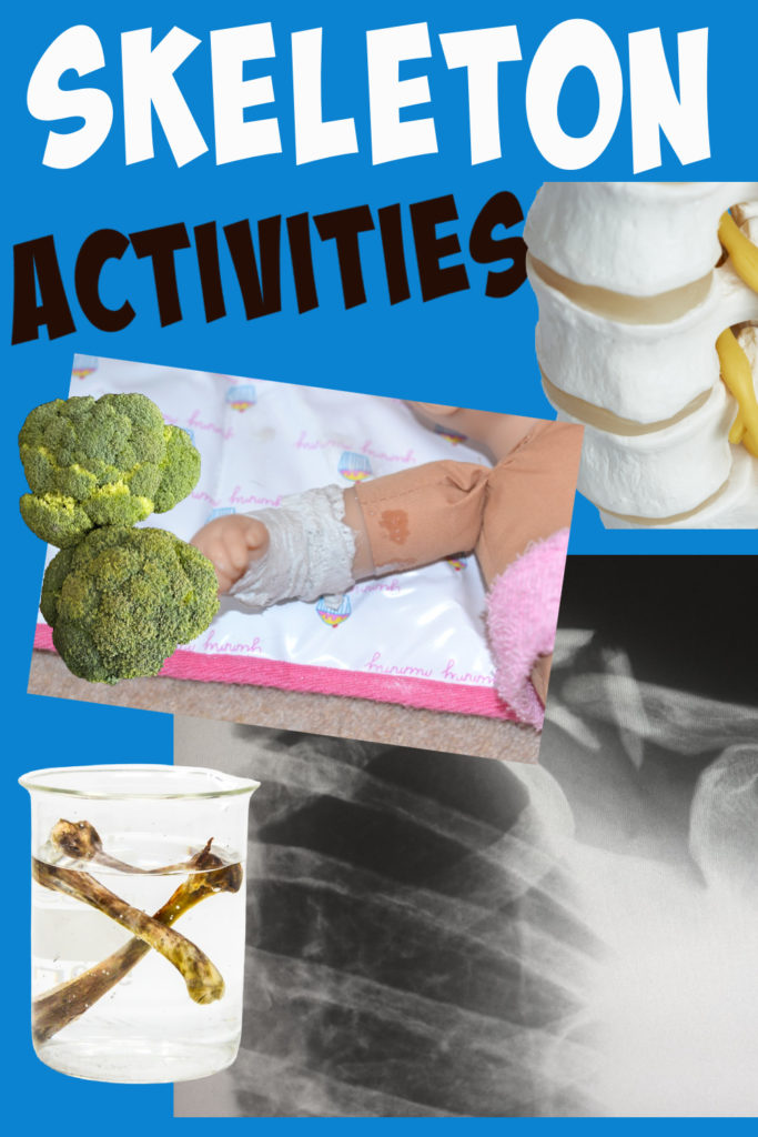 Collage of easy skeleton activities for kids. Plaster cats on dolls, bendy bones and spine models.