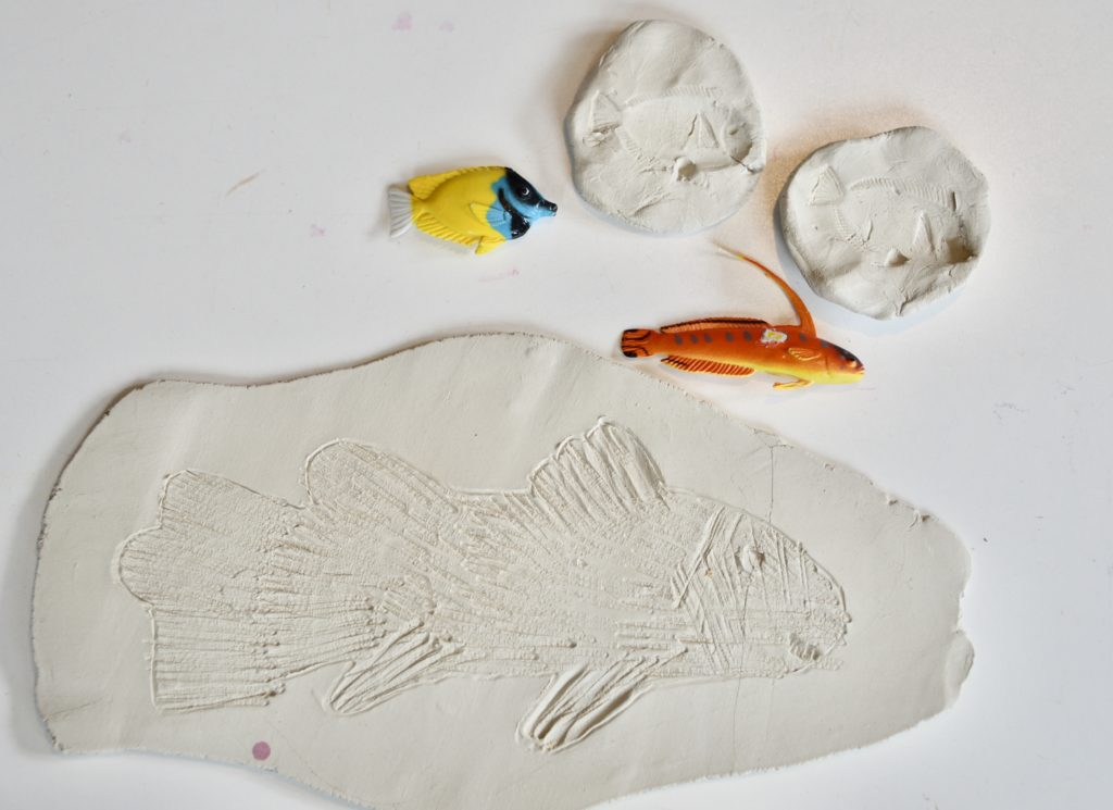 Fish fossils made from clay
