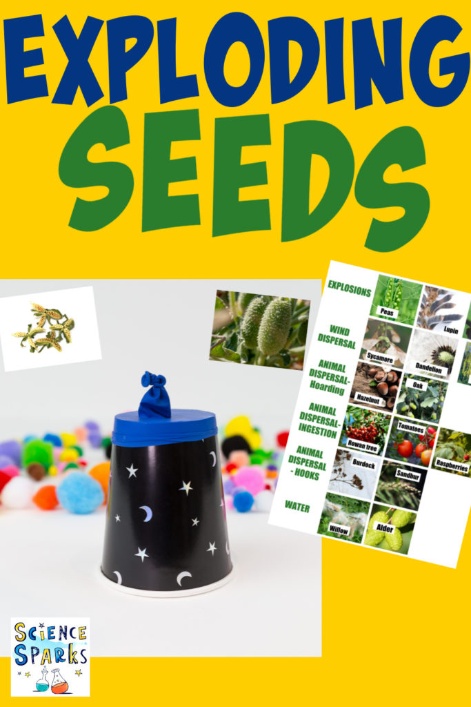 collage of a popper made with a paper cup and balloon as a seed dispersal machine