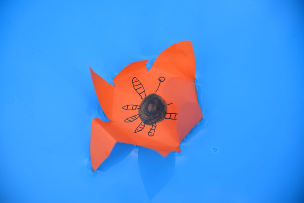orange paper flower in a tray of water for a capillary action science experiment