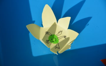 Image of a paper flower sat in a tray of water for a capillary action science experiment