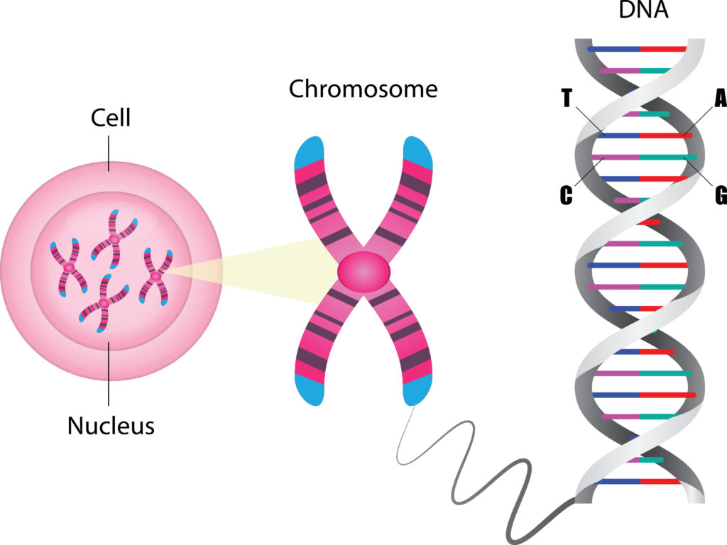 Image showing a cell, nucleus and DNA