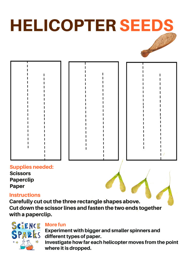Instructions for a seed dispersal activity