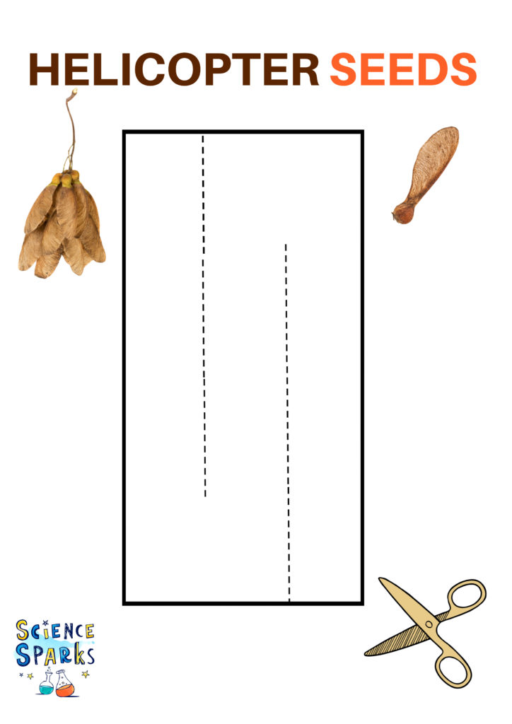 Template for a paper spinner to demonstrate seed dispersal